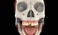 3D牙科补牙动画